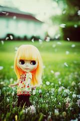 Raining Blossoms - 296/365 ADAD