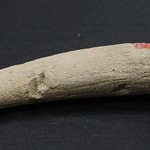 "<b>100.99hf01.1.100_1</b><br/> Antler; Flaking Tool Unknown Provenience<a href=""//farm4.static.flickr.com/3336/4574576179_9c43290f7f_o.jpg"" title=""High res"">&prop;</a>"