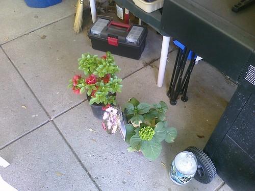 Red hot Azalea and Hydrangea