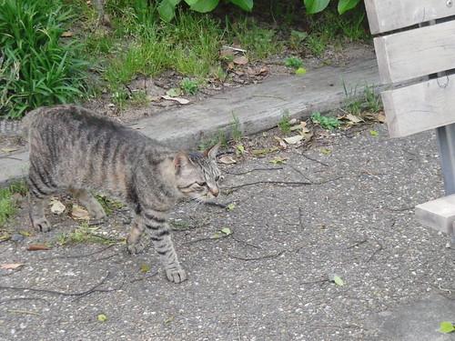 Today's Cat@2010-05-10