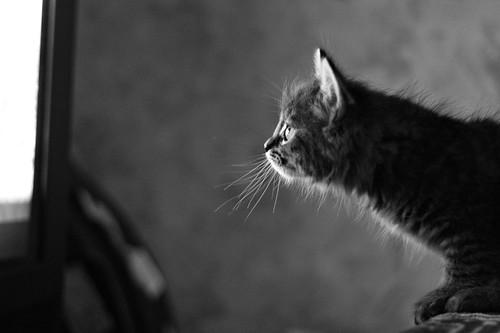 кот попов watching tv