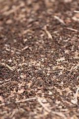 Ants Bokeh (Thomas Rawyler) Tags: canon ant ants formicarufa