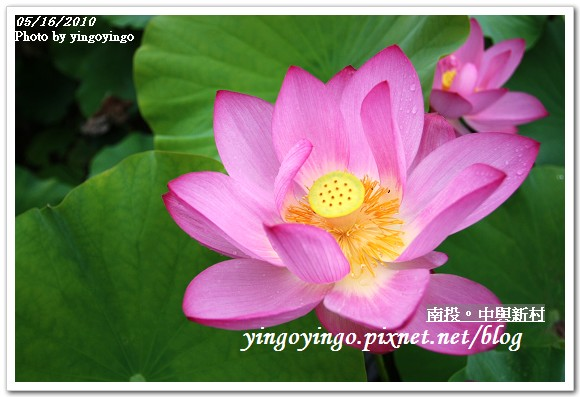 中興新村99年蓮花I2162