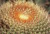 Barrel cactus by kevindooley