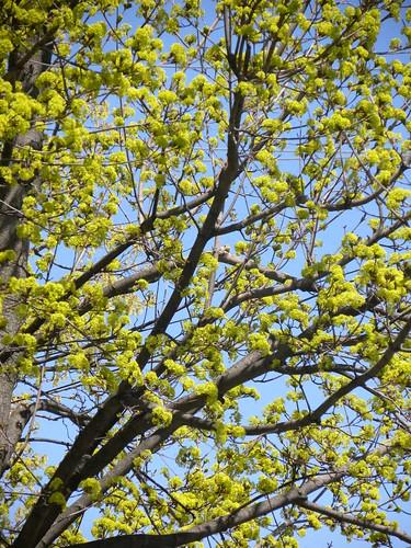 Teenage tree buds
