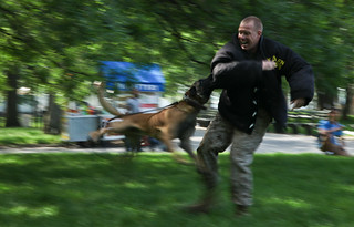 Dog Bites Marine at Marine Day Battery Park - ...