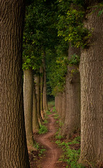 Bicycle path (* Fred T *) Tags: trees holland nature netherlands bikepath bike bicycle cycling spring bomen path pad nederland natuur lane fred lente pathway fietsen fiets bicyclepath laan fietspad gelderland fredt madfred