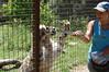 noms (JSleeper) Tags: oregon snowleopard greatcatsworldpark