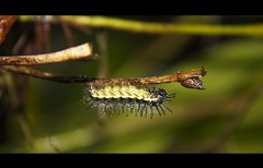 How many feet do I have? (Dss) Tags: trip travel macro nature colors animals canon costarica creative insects places cartago luoghi particulars platinumphoto anawesomeshot wildlifeshots