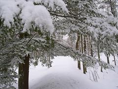 Path (rjb3usa) Tags: bridge trees winter white snow creek stream scene blanca