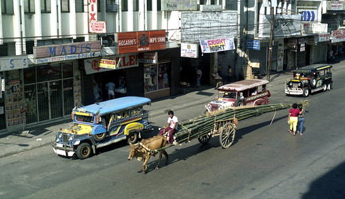 A Bullock and cart with a load of Bamboo and 3 Jeepneys in A B Fernandez Avenue, Dagupan, Pangasinan, Philippines.