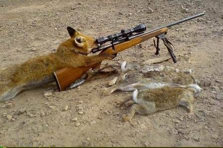 fox_hunting_for_rabbits