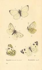 papillons d 10