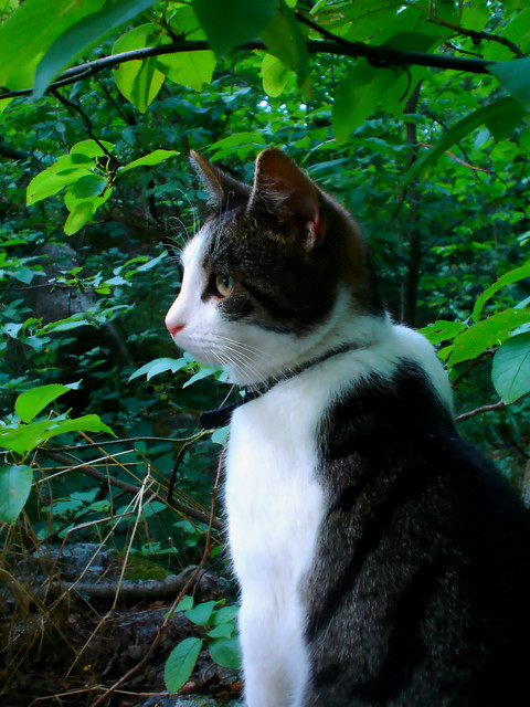 cat in the forest