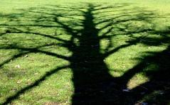 Lastra (Anto_RM) Tags: tree verde green silhouette ombra albero lastra profilo