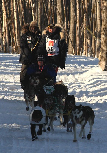 Iditarod Sled Dogs. start of the Iditarod sled