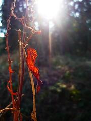 (nocna_tozsamosc_grzanki) Tags: light orange spring bokeh wiosna światło pomarańczowy zakrzów badyl