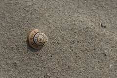 Caracol (Passarola Toledo) Tags: naturaleza beach nature animal playa arena espiral caracol invertebrados passarolatoledo