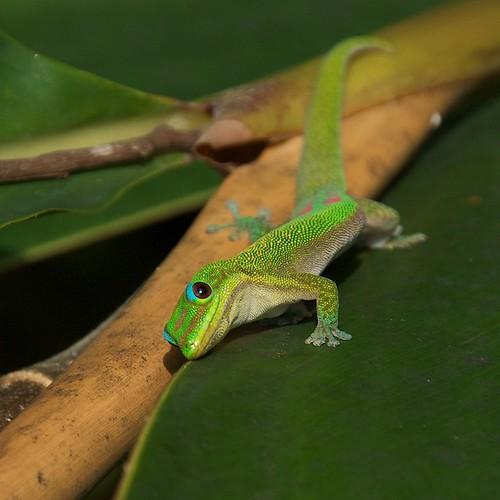 Gecko #5