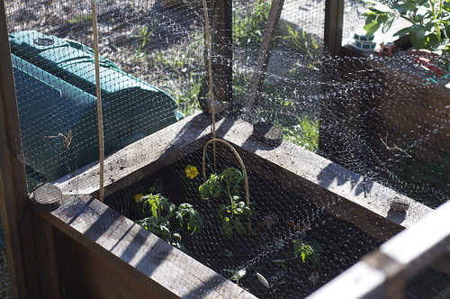 Finally, netting to keep out those pesky seed and shoot eating foxes.