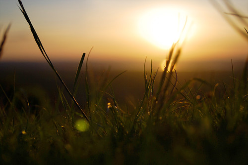 Sunset through wild grass