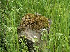 Frhling 2009 (Silandi) Tags: nature grass animal animals germany landscape deutschland spring europe natur frog grassland landschaft frosch 2009 frhling badenwrttemberg kocher neuenstadt renateeichert resilu