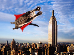 Super-Cat in NY (Julia-D) Tags: newyork cat photoshop kitten funny empirestatebuilding
