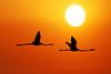 Uno sfondo per due.... (Tati@) Tags: tramonto volo sole cagliari tati controluce libertà fenicotteri fbdg sognidreams allaboutsun fotodanimo artofimages annatatti bestcapturesaoi elitegalleryaoi