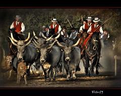 "I "" Butteri "" (sirVictor59) Tags: life horses italy horse nature easter topf50 nikon bravo cowboy italia nikond70 reserve tuscany tradition toscana toscane topf100 cavalli cavallo viterbo italie tuscania italians lazio naturelle maremma cavaliere 70300 cavalieri galope vacca tuscia réserve gardian buttero maremmano butteri mandria platinumphoto etrusque theunforgettablepictures maremmani nitritidiprimavera sirvictor59 paololivornosfriends maremme"