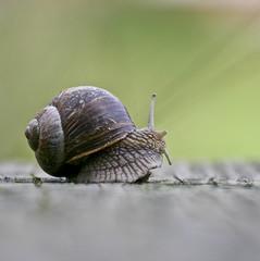 lumaca - snail (nepalbaba) Tags: nature snail natura lumaca twop naturesfinest abigfave opequenogigante nepalbaba