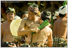 Mekare-kare: Pandanus War (Bali Based Freelance Photographer and Photo Stocks) Tags: bali work canon indonesia eos photographer village traditional culture made 2009 freelance adat budaya balinese pandan fotografer unik perang yudis tenganan baliview baliphotographer yudistira mekare myudistira madeyudistira yudist myudistiraphotography