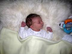 Sleeping (Jane Goth) Tags: sleeping baby tom fleece babytoy 5days