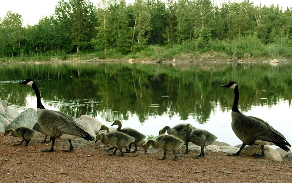 One Big, Happy Family [169/365]