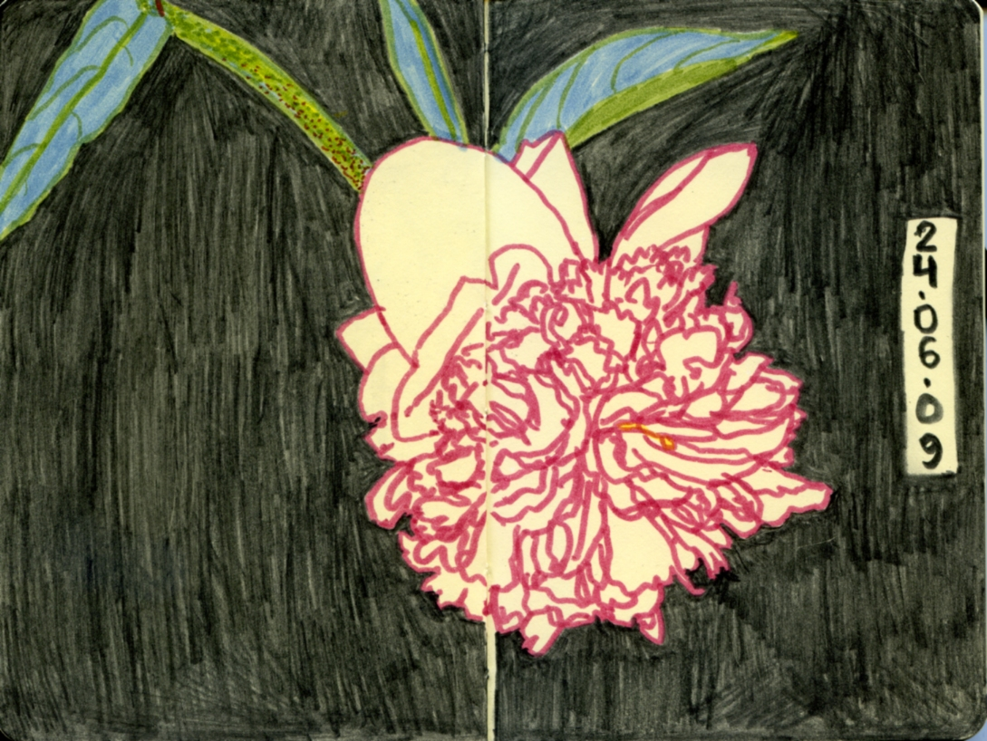 nocturnal peonie