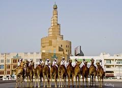 Camel Parade (Kooltug) Tags: market police doha qatar fanar stateofqatar souqwaqif dohasouq kooltug qatartradition camelinqatar cultureqatar