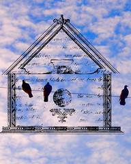 birds on a line birdhouse5