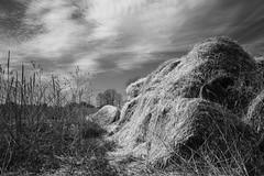 Farmscape #2 (peterkelly) Tags: cambridge sky bw ontario canada field clouds digital straw canadian blair northamerica bales bale waterlooregion rarecharitableresearchreserve northdumfries springbankfarm