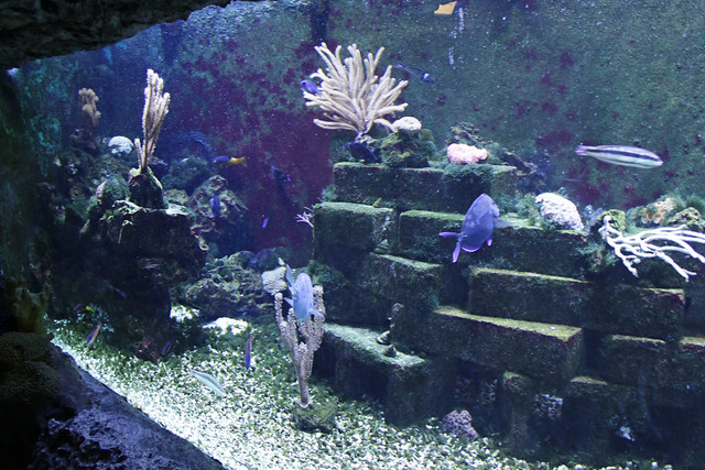 MODS fish tank 2