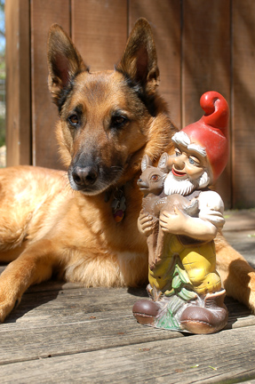 Jake n the gnome