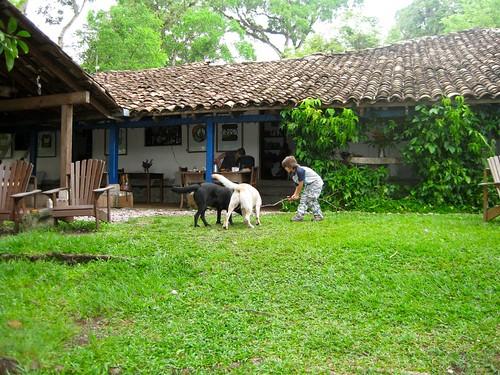 kid playing with dogs in hacienda san lucas in copan