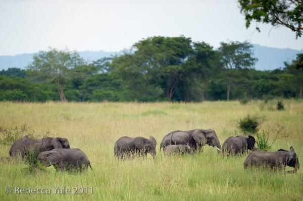 RYALE_Rwanda_Uganda_Safari-264