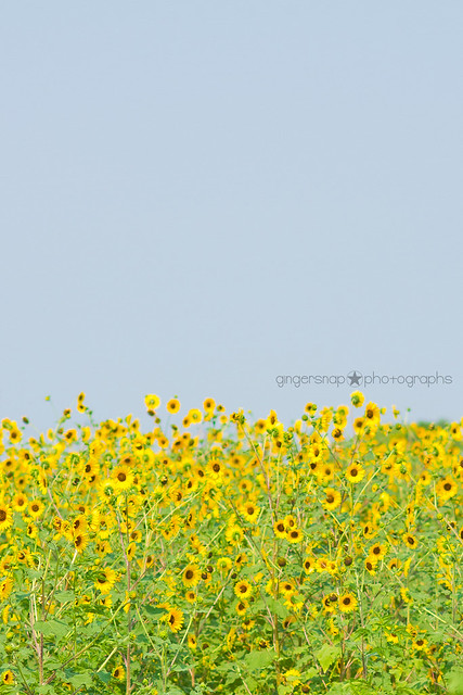 sunflower dresses4