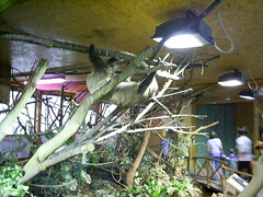 S4026186 (pappgabor) Tags: zoo veszprém 2007