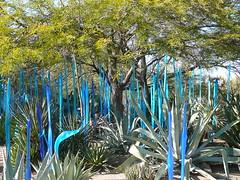 Blue Chihuly Reeds (alist) Tags: phoenix garden botanical desert alicerobison