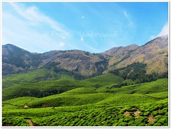 nature's beauty in munnar