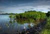 Mangrove #1 at Serangan Island (Sayid Budhi) Tags: bali mangrove bakau serangan seranganisland citrit pulauserangan hutanbakau