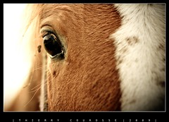 ; (thierry.courosse (busy !!! totally !!!)) Tags: portrait horse france cheval iso200 oeil 200mm f32 1400s tamron70200 sonya700