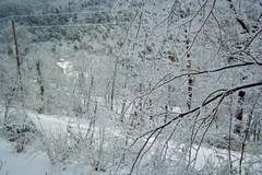 Looking down on Hillside Avenue (junebug_1944) Tags: icestorm eurekaspringsar january2009