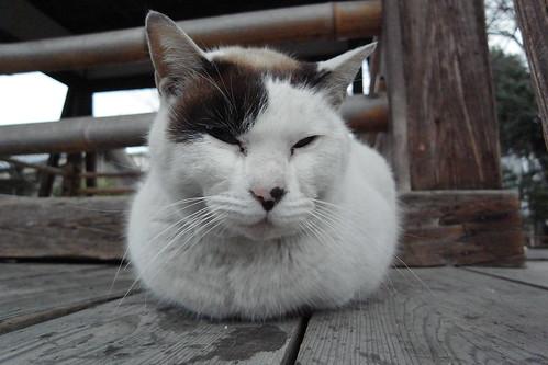 Today's Cat@20090223