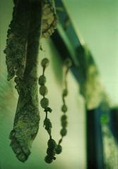bens room (kaleidoscope bones) Tags: art love film window beautiful scarf 35mm bedroom shadows kodak curtain happiness blinds vivitar 400iso 50mmlens fuckscanners theystainmyphotos